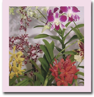 Hawaiian Orchid and Tropical of the Month Clubs