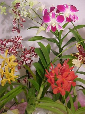 Hawaiian orchid plants and anthurium plants in decorative