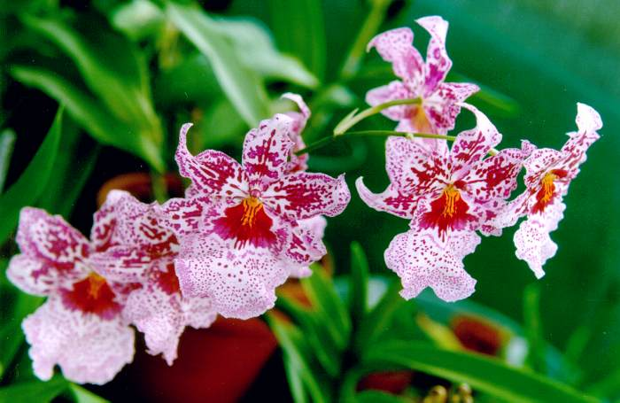 There Are Also Orchids At The Nybg Garden When Weather Is